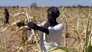 This photo, released by Oxfam in 2011, shows Goutrane Saleh, 42, picking what remains in his millet crop. Severe droughts, floods and heat waves rocked the world in 2011 as greenhouse gas levels climbed, boosting the odds of some extreme weather events, international scientists said Tuesday