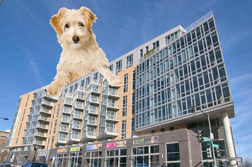Development Watch: D.C. to Get Its First Dog Daycare in a Mixed-Use Building