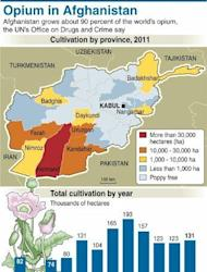 Graphic on opium cultivation in Afghanistan. Corruption is enabling the drug trade to thrive and pushing Afghans towards the Taliban, analysts warn -- fuelling the two drivers of instability in the war-torn country