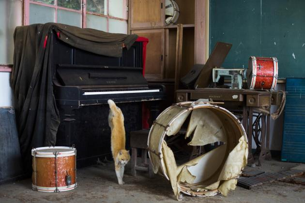 A cat jumps off a piano in the music room of a derelict school on Aoshima Island in the Ehime prefecture in southern Japan