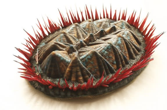The textured model in clay, resin and silicone shows how the multiplacophoran looked 390 million years ago.