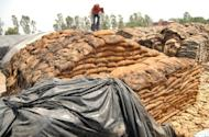 An Indian labourer covers rotting wheat at Khamano village 40 kilometres from Ludhiana in May 2012. India has approved the export of two million tonnes of wheat from its overflowing stocks to create storage space for new crops, the government said on Wednesday