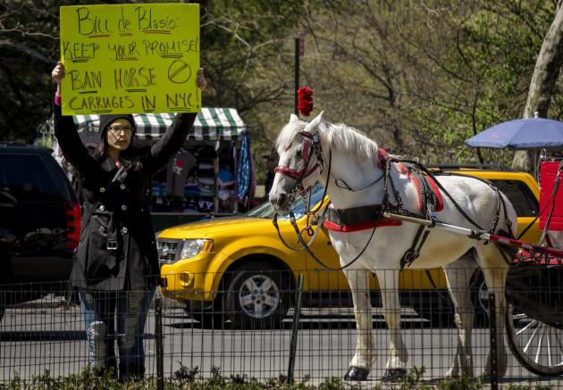 A protester holds up a sign against horse-drawn carriages at Central Park in New York