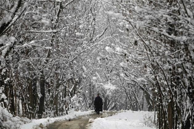 A Kashmiri man walks under the snow-covered trees after heavy snowfall in Srinagar