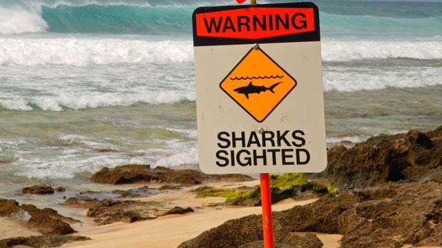 Shark Attacks Oregon Man in Hawaii