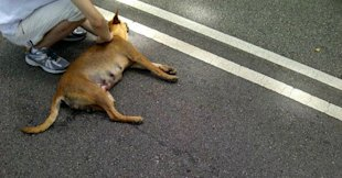 Remy Ong allegedly ran over a stray dog (Photo courtesy of Danny Danerthon Ng)