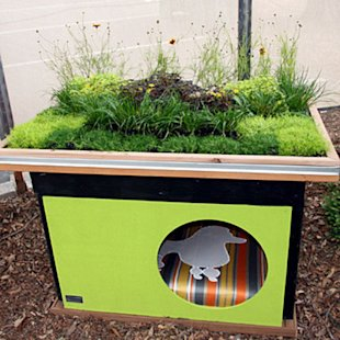 A living roof for Fido