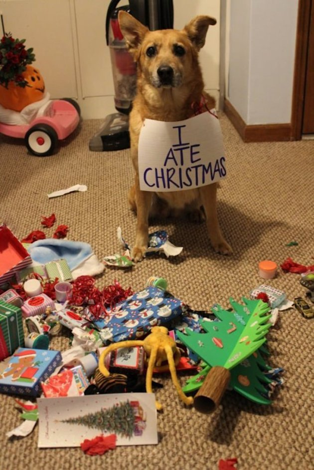 10 Animals Who Refuse To Get Into The Christmas Spirit image dog 2.jpg