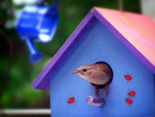 Real Estate Agents: Using Twitter (and Other Social Practices) image bird on house