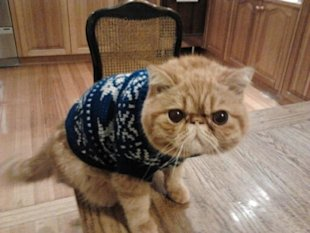 These 26 Cats Wearing Christmas Sweaters Will Put A Smile On Your Face image Cat In Christmas Sweatet is not happy