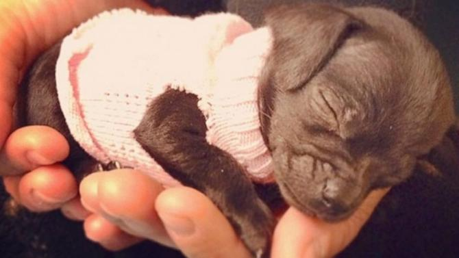Tiny Recovering Chihuahua Nellie Steals Hearts on Instagram