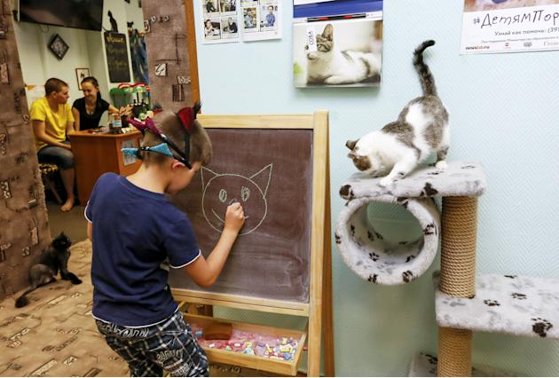 "A boy draws at the ""Kis-Kis"" Cat Cafe in the Siberian city of Krasnoyarsk"