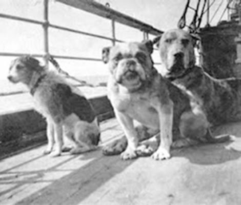 Remembering the Dogs of the RMS Titanic