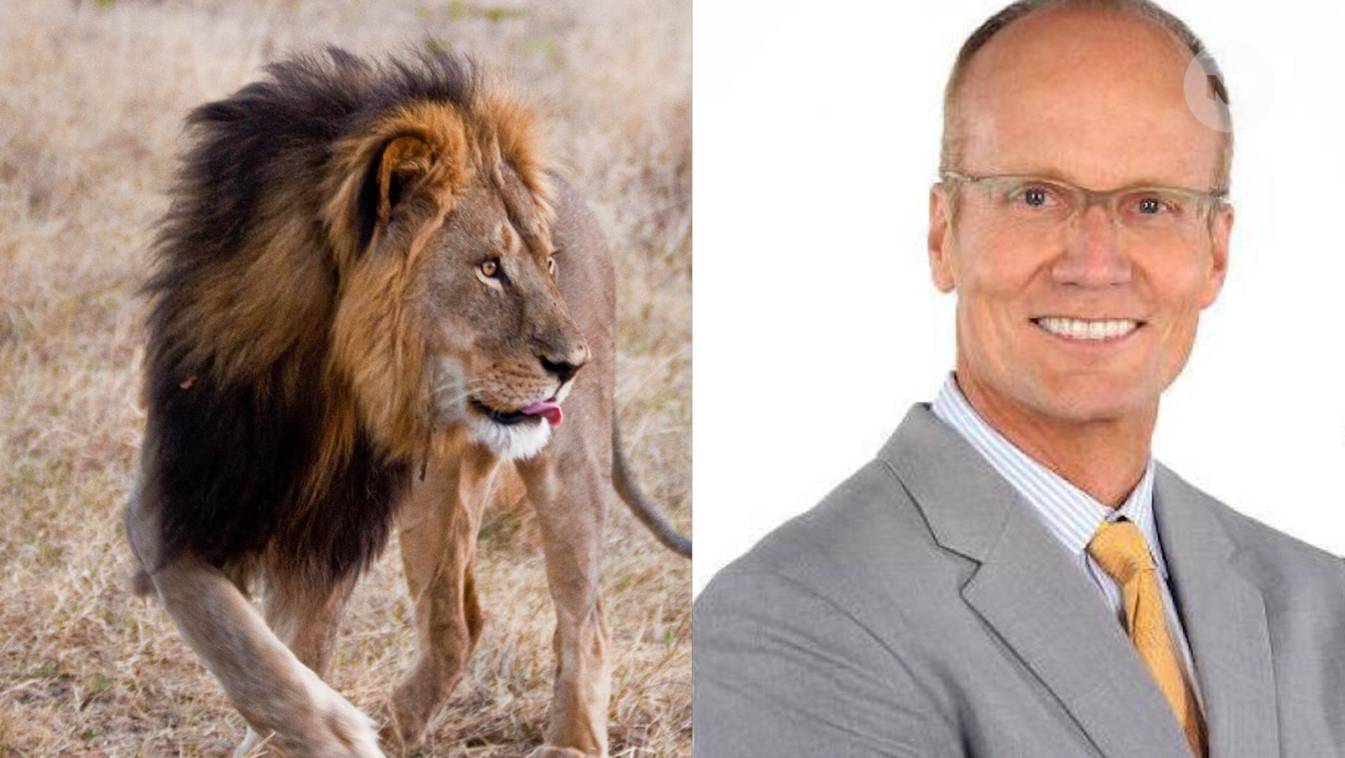 Dentist Walter James Palmer sends patients apology letter after killing Zimbabwe lion Cecil