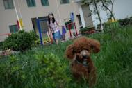 Nancy, Li Na's daughter, walks her dog near her home in Beijing, on May 12, 2013. With two cars, foreign holidays and a cook for their apartment, Li's family epitomises the new middle class created by China's decades of rapid economic growth