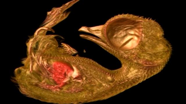 Journey through quail embryo wins Nikon science video prize