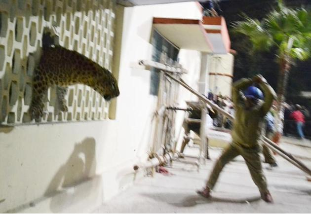 Leopard enters Meerut hospital, creates panic