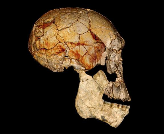 "Four decades ago, in 1972, the Koobi Fora Research Project (KFRP) discovered the enigmatic fossilized skull known as KNM-ER 1470, or ""1470"" for short, which ignited a now long-standing debate about how many different species of early Homo"