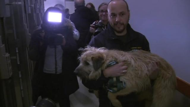 Dogs of Sochi arrive in U.S..