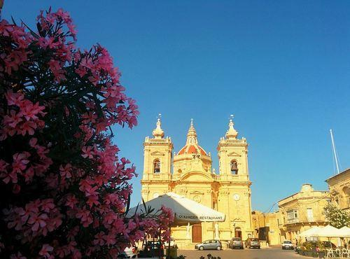 the Oleander in Gozo