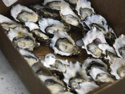 Oyster Fraud: The Restaurant Industry's Dirty Little Secret