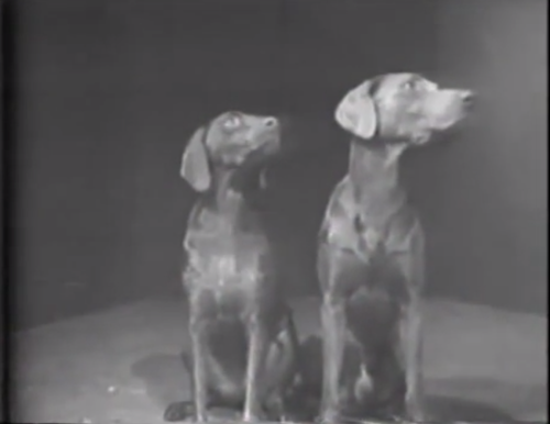 Why We're Watching This Classic Dog Video This Week