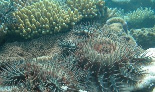 COTSbot-QUT-coral-reef-starfish-COTS-ecobot-australia