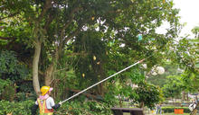 泰利颱風即將來襲 北市加強樹木修剪及路燈檢修