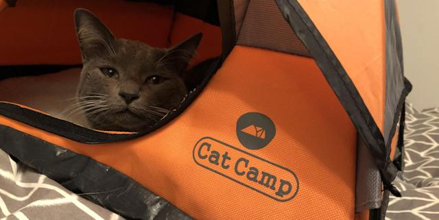 A Tent For Your Cat