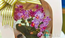 小精靈蝴蝶蘭 雲林獲技轉授權