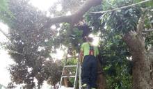 老翁鋸樹手臂遭壓斷 雲縣消防局緊急搶救