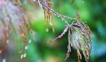 東北風減弱周末好熱!中南部午後有雷雨