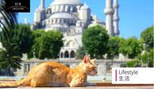 伊斯坦堡是「貓的天堂」?面對流浪動物,我們可以這樣做