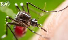 16年來最嚴峻疫情 香港長州再傳登革熱病例