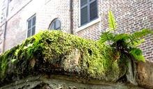 低成本的生物指標 用苔蘚監測都市大氣污染