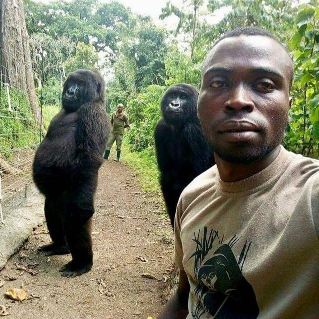 Congo park ranger tells of taking viral selfie with gorillas