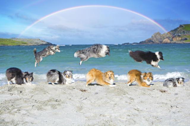 Shetland (Bild: Caters News)