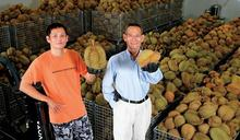 媲美製藥業的保鮮技術!台灣水果大王突破季節限制,把冷凍鮮榴槤做到亞洲唯一