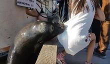 你不會鑽進樹叢給灰熊一個三明治,為何會對海獅餵麵包?──談動物表演的迷思與動物教育的匱缺
