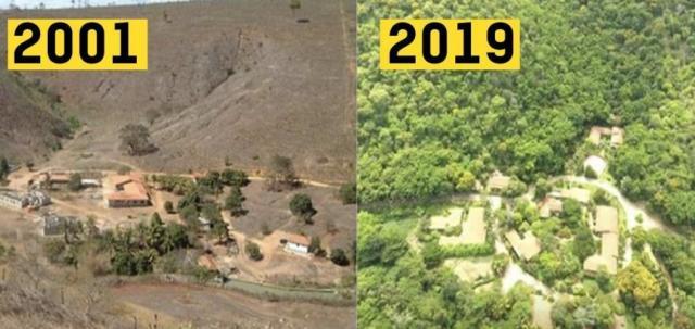 Resultado de un proyecto de reforestación en Minas Gerais, Brasil en el que se plantaron 2,7 millones de árboles durante 20 años. (Crédito imagen: Sebastião Salgado).