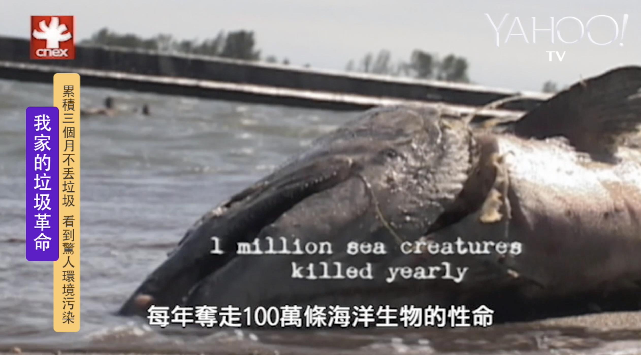 全球每五分鐘用掉上兆塑膠袋 每年奪走百萬海洋生物性命