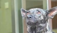 朝陽科大的桃太郎記:一個學生獨力籌辦校犬社的故事