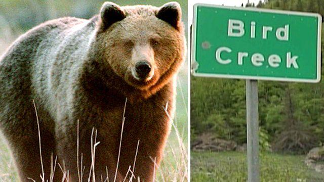 Desperate 911 call: 'I was mauled by a brown bear'