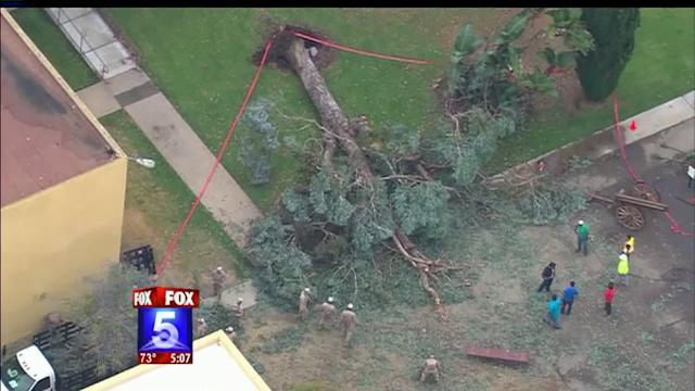 Tree Falls Injuring 15 People