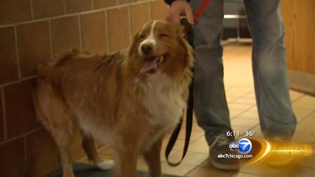 Dog rescued from Lake Michigan ice reunited with owner