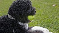 Monitor your dog's activity and health with Tagg Pet Tracker