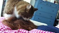 Cat Licks Owner's Hair as Wake Up Call