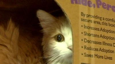 'Cat'astrophe Hits Humane Society