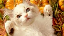 20 Cats Who Are Ready For Thanksgiving