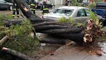 Downed trees cause widespread damage in SF